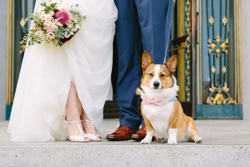 Corgi at Wedding, wedding dog
