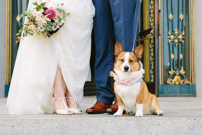 San Francisco City Hall wedding photo, corgi dog at wedding, bridal bouquet ideas