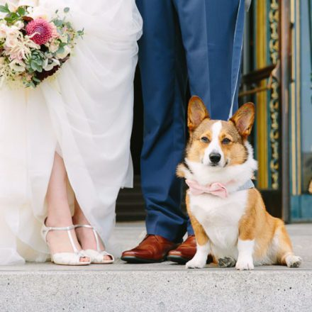 Dog at a San Francisco City Hall wedding